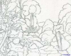 Drawn forest rainforest