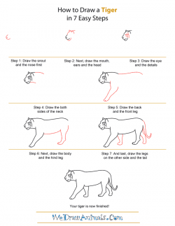 Drawn tiiger step by step