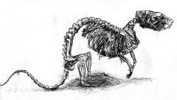 Drawn rat vicious