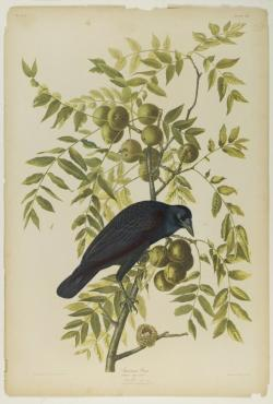 Drawn nature john james audubon