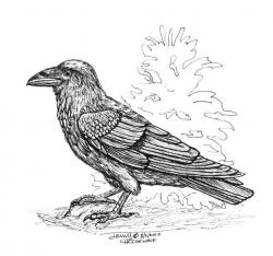 Drawn raven crow beak