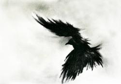 Drawn crow flight drawing