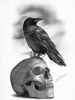 Drawn raven pencil drawing