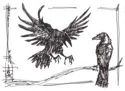 Drawn raven raven landing