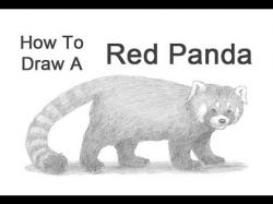 Drawn red panda
