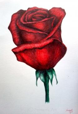 Drawn rose ballpoint pen