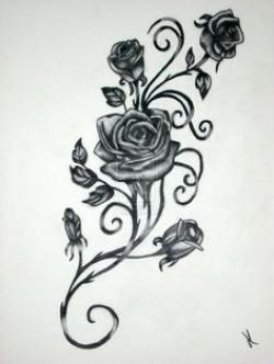 Drawn ivy rose vine