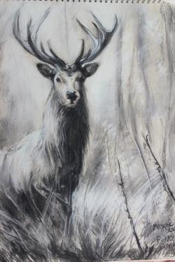 Drawn stag majestic