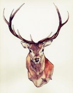 Drawn stag full body