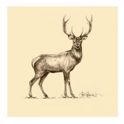 Drawn stag deer drawing