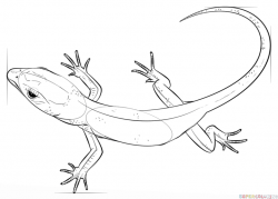Drawn lizard line drawing