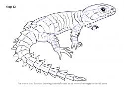 Drawn reptile lizard head