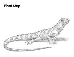 Drawn lizard pencil drawing