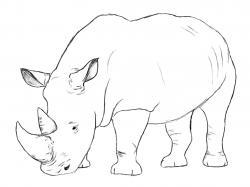 Drawn head rhino