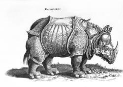 Drawn rhino durer rhino