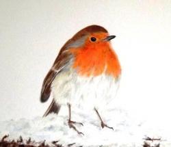 Drawn robin colour