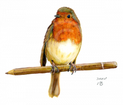 Drawn robin garden