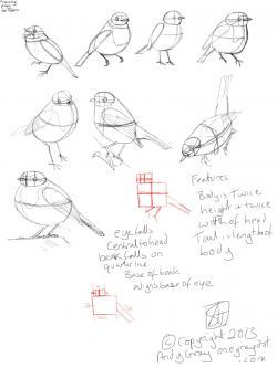 Drawn robin sketch