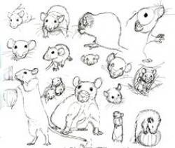 Drawn rat headed