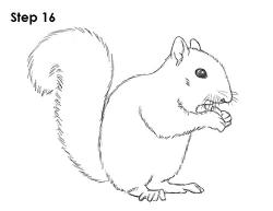 Drawn squirrel squirrel tail