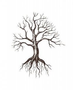 Drawn roots