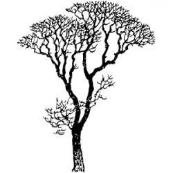 Eucalyptus clipart black and white