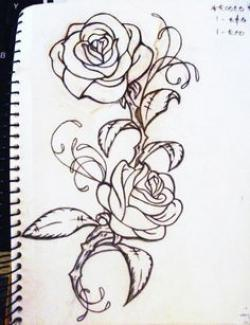 Drawn rose bush