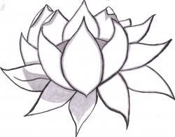 Drawn elower simple