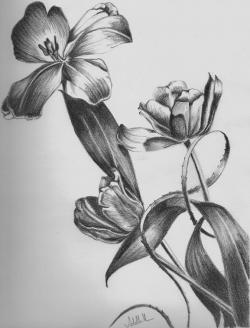 Drawn elower simple pencil art