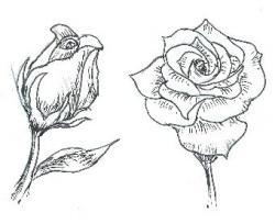 Drawn vireo easy