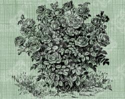 Drawn rose bush stamp
