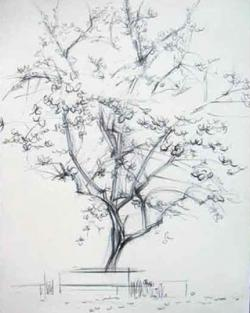 Drawn sakura blossom almond tree