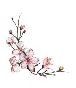 Drawn cherry blossom apricot blossom