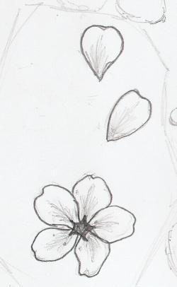Drawn sakura blossom flower petal