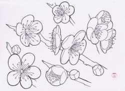 Drawn elower japanese