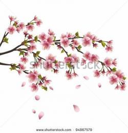 Drawn ume blossom sakura bloom