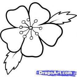Drawn sakura blossom pencil step by step