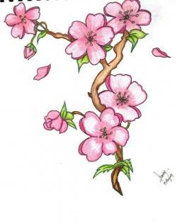 Drawn flower sakura