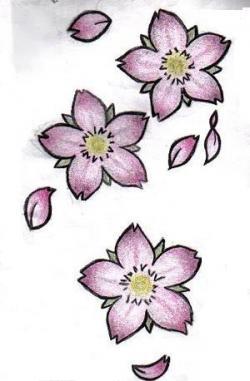 Drawn ume blossom flower petal