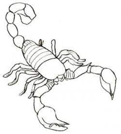 Drawn scorpion