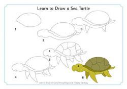 Drawn turtle cute weird creature