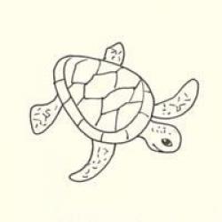 Drawn sea turtle