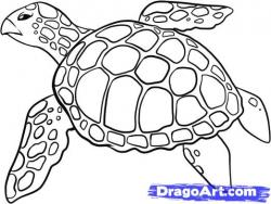 Drawn sea life sea tortoise