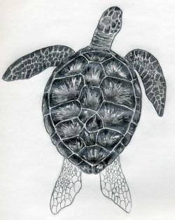 Drawn sea turtle