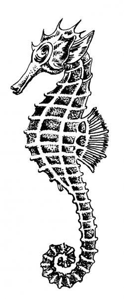 Drawn jellies seahorse