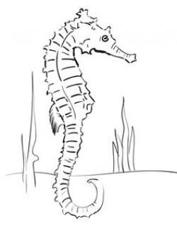 Drawn seahorse line drawing