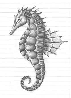Drawn seahorse pencil drawing