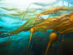 Drawn seaweed kelp forest