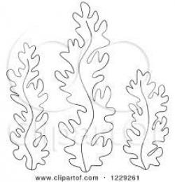 Drawn coral seaweed