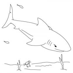 Drawn shark extinct